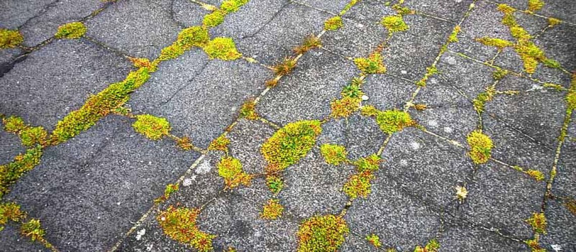 Moss on Asphalt Shingles Indianapolis - Richmond Exteriors - Indianapolis Roofing Company